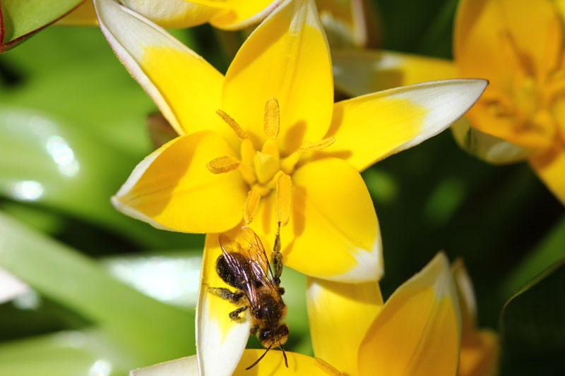 Mai 2011 : Fleurs et bibittes
