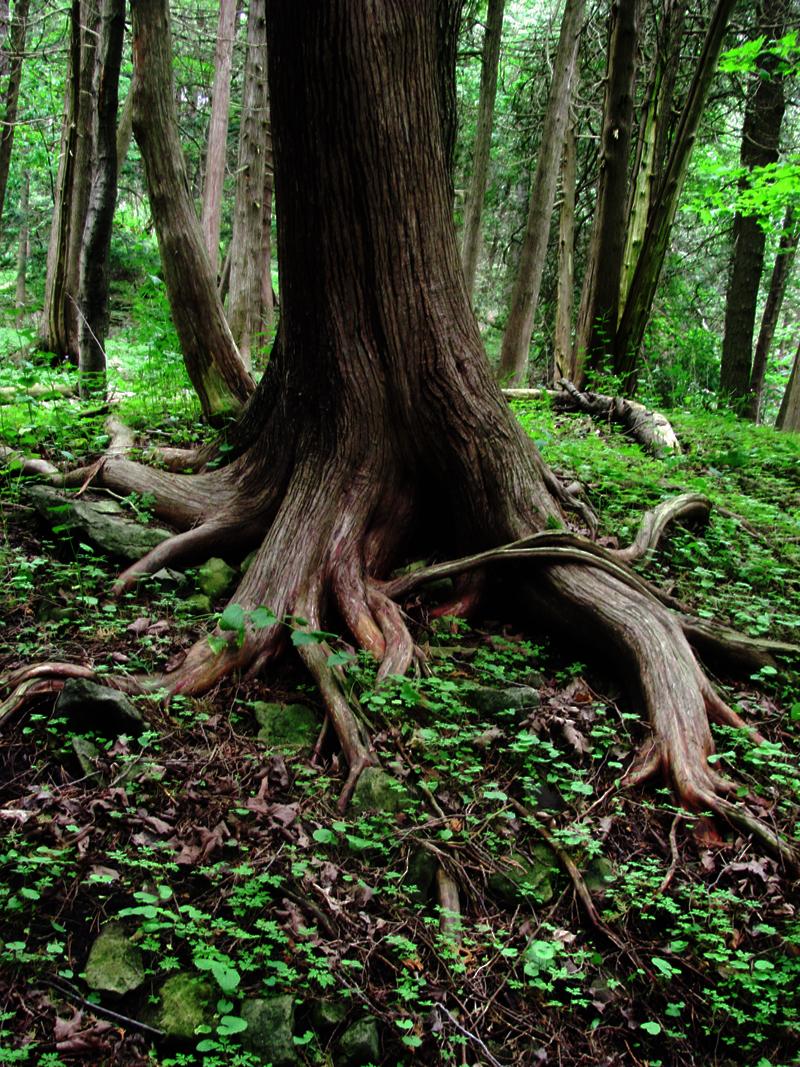 Août 2011 : La canicule à l'ombre des arbres