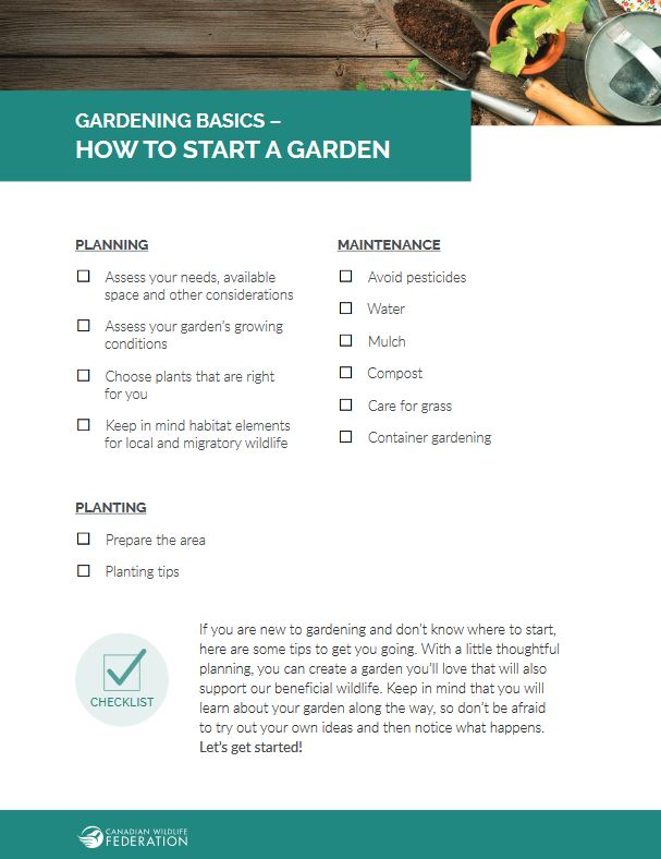 Basic gardening checklist thumb