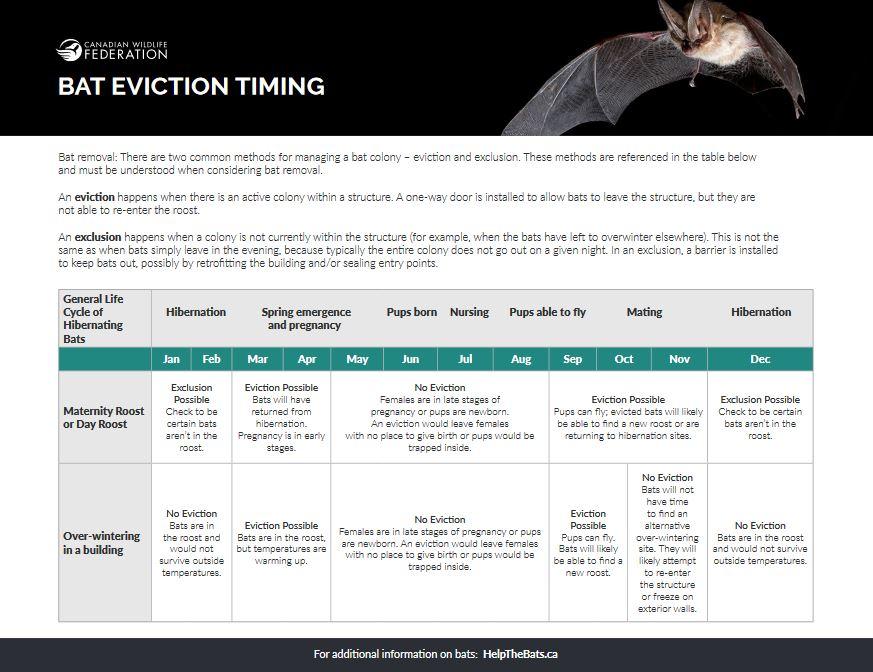 bat evict thumb