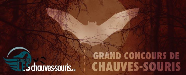 Grand concours cinglé de chauves-souris d'halloween