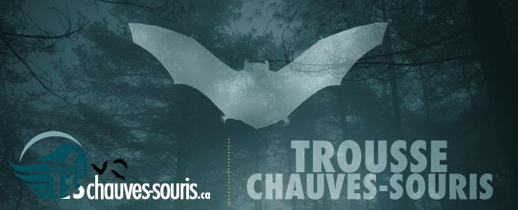 Bat fundraiser banner in french
