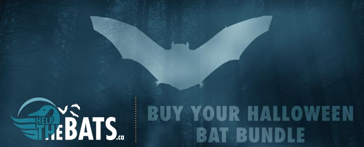 Buy Your Halloween Bat Bundle