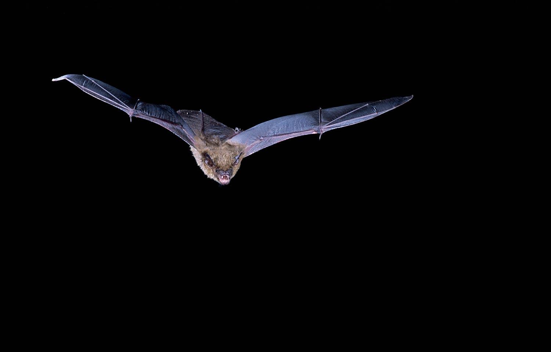 bat night flying