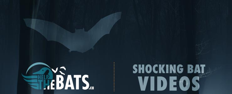 bat video header