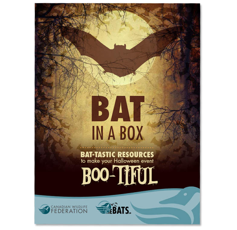 bat in a box