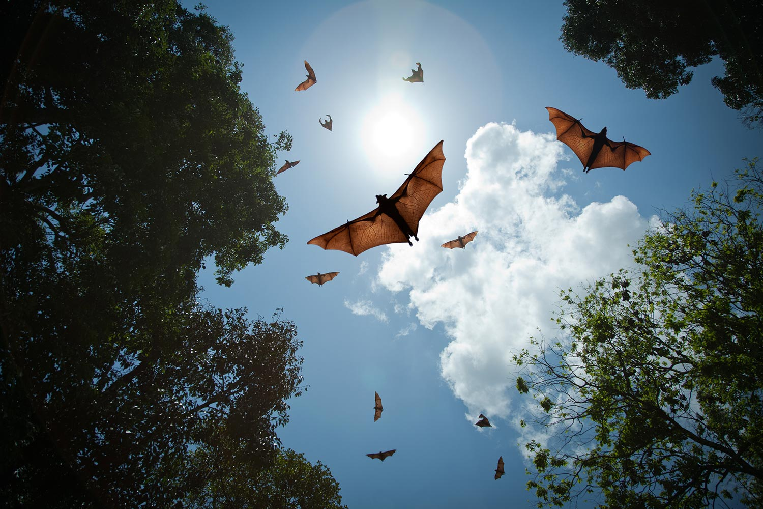 Bats flying around in the sunlight