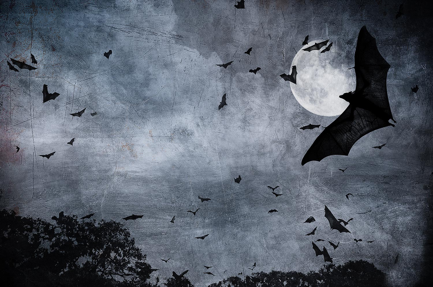 bat illustration night moon