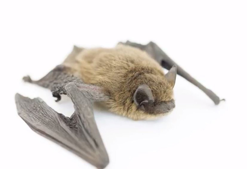 CWF Help the bats video