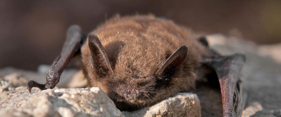 Help the Bats