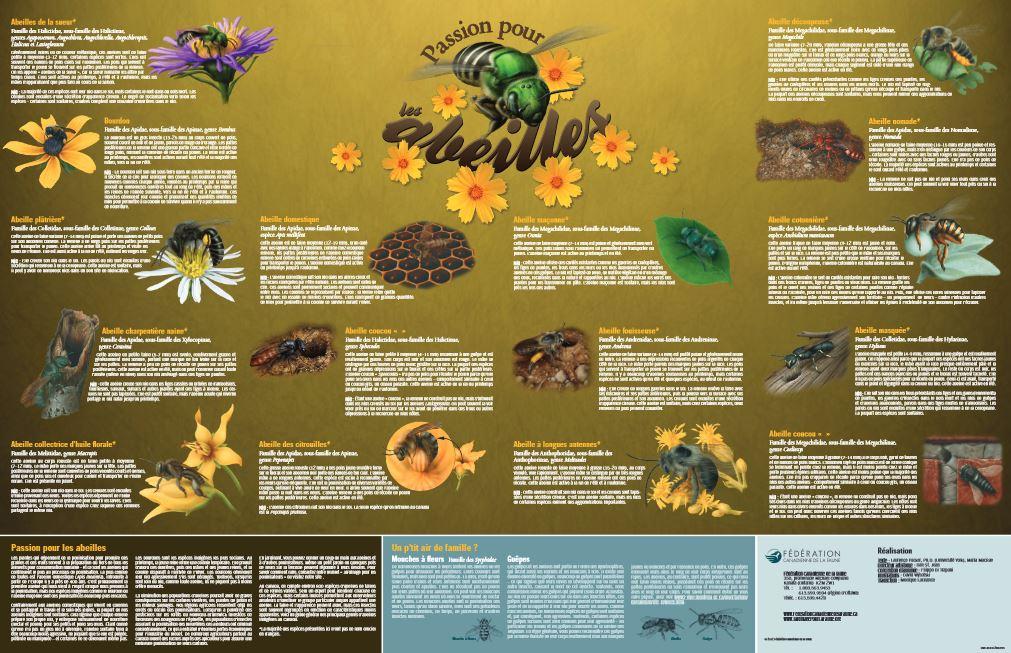 bees poster thumb fr