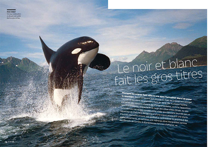 Article image with photo of a killer whale breaching