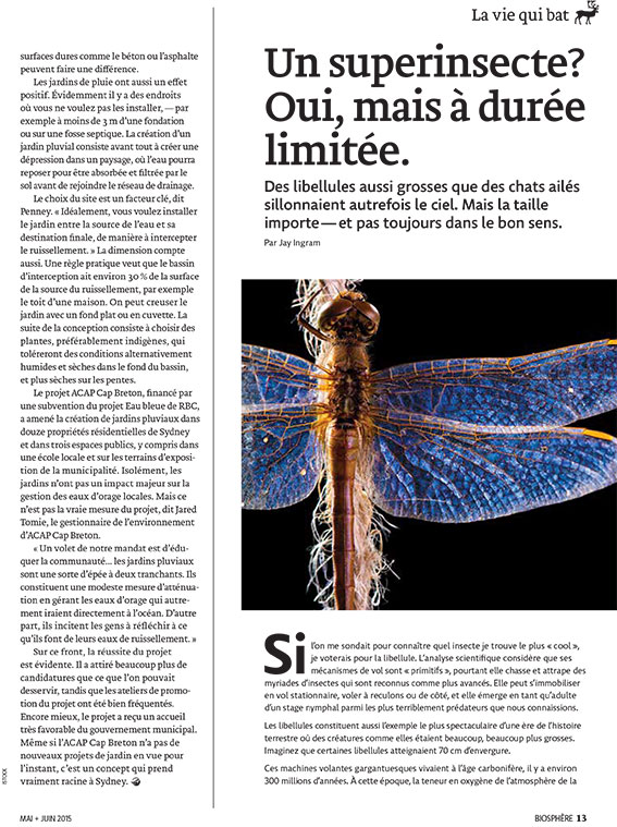 Article image with photo of dragonfly