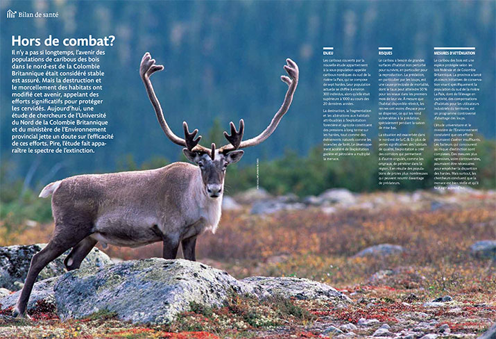 Status report of Caribou
