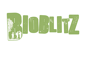 bioblitz flip tile