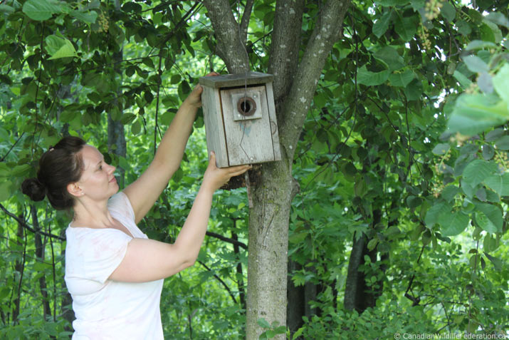 Lady hanging a birdhouse