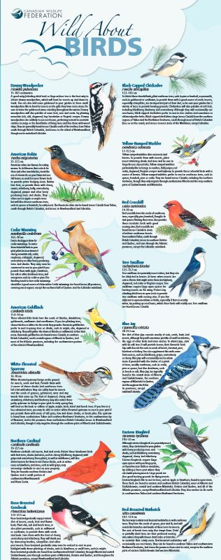 bird poster thumb