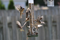 Birds at a feeder