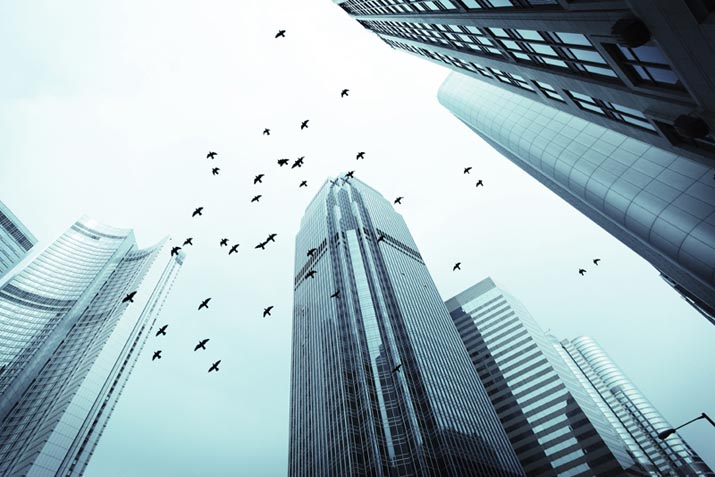Birds flying around high rises in the city