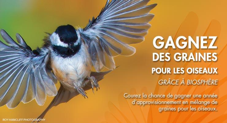 birdseed contest header fr