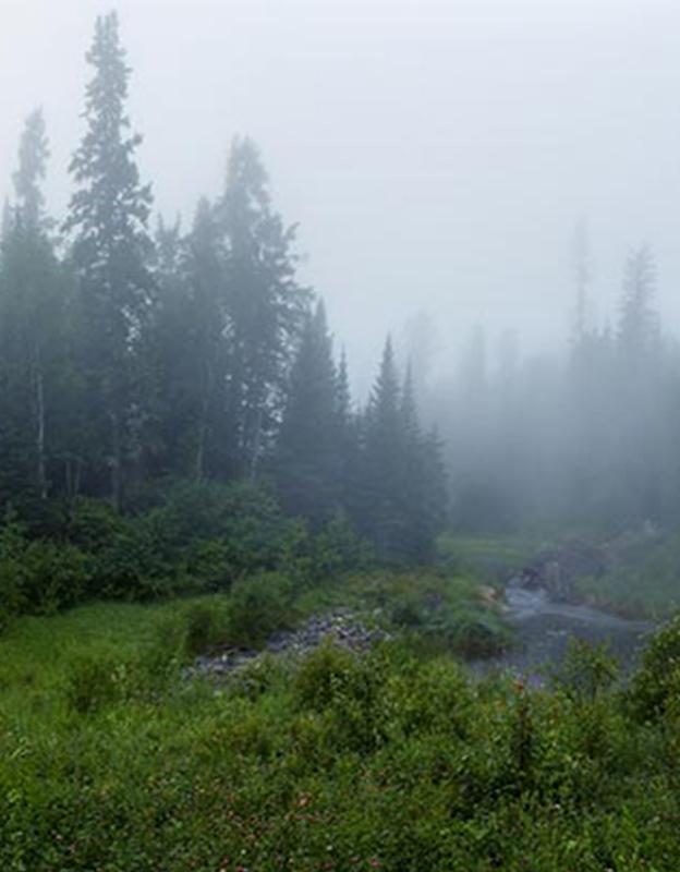 boreal forest fog