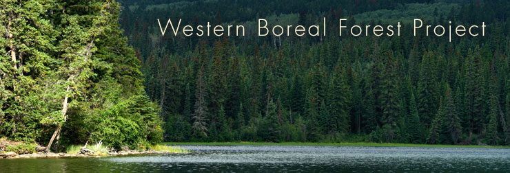 boreal forest header