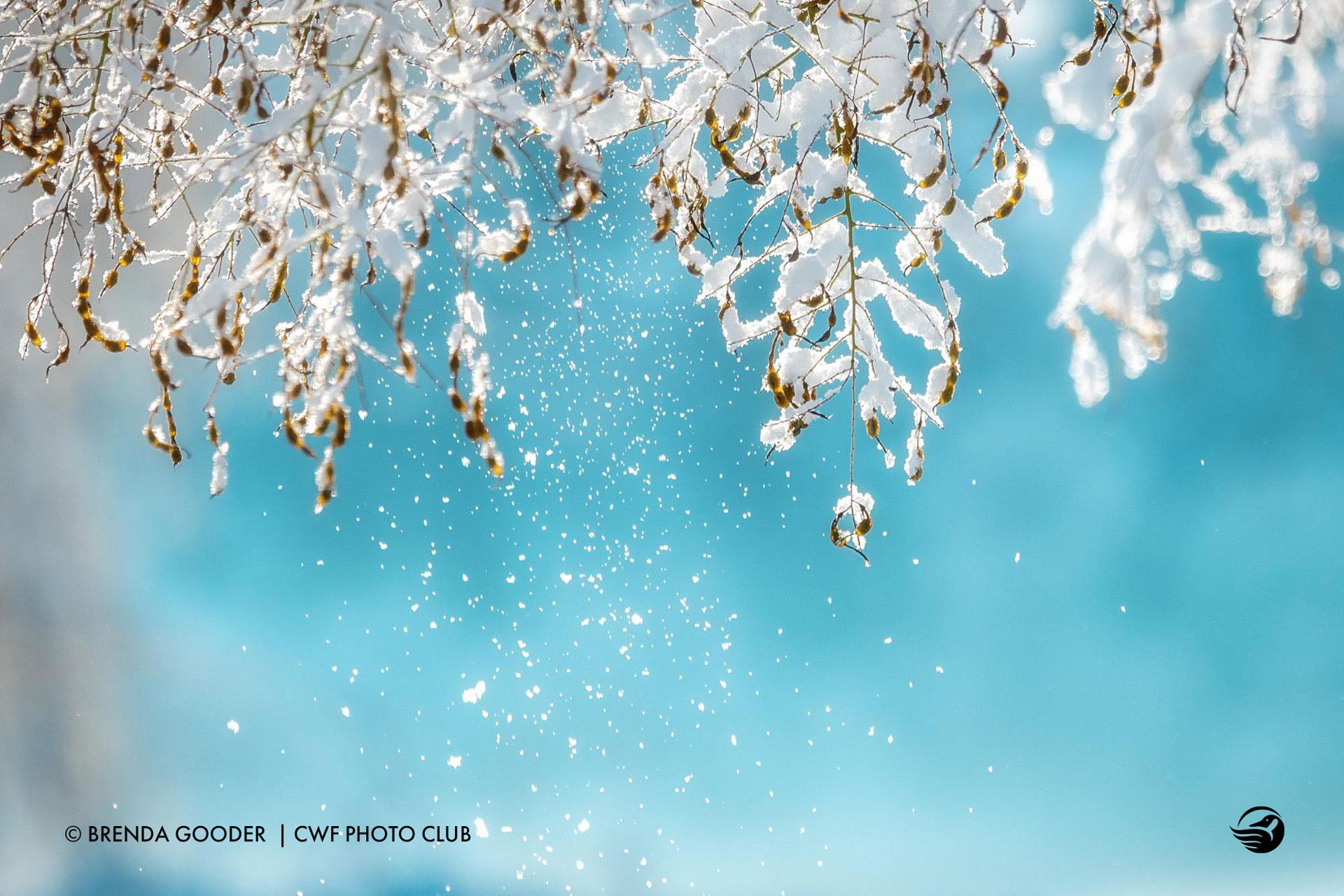 brenda-gooder-frozen-branches
