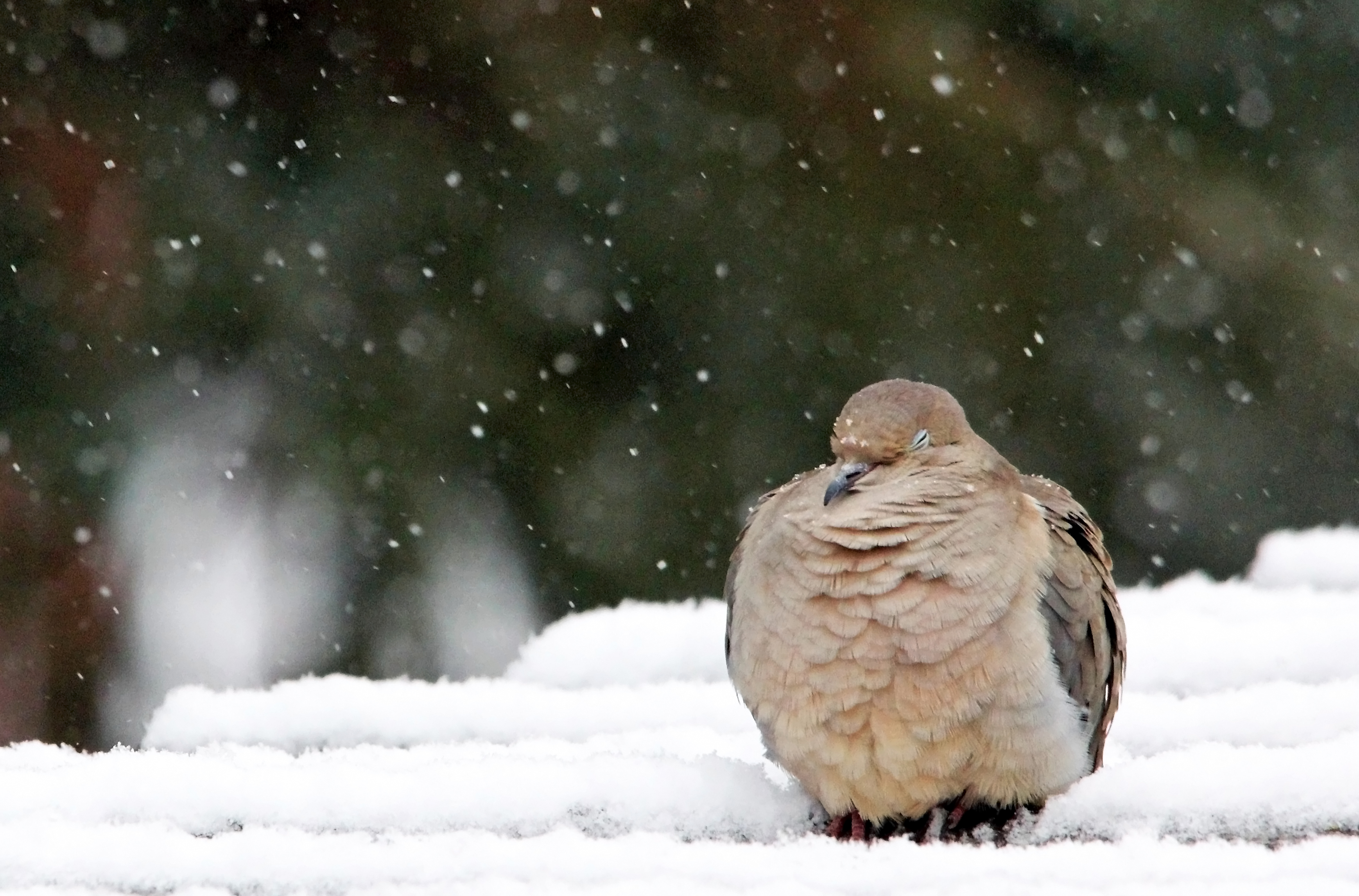 dove brr it's cold snow