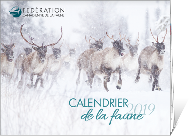2018 CWF calendar