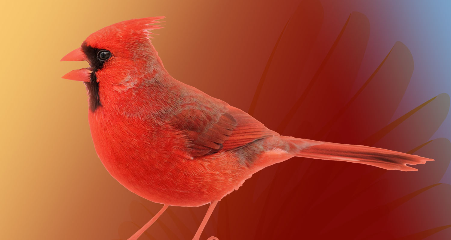 wab conservation science cardinal