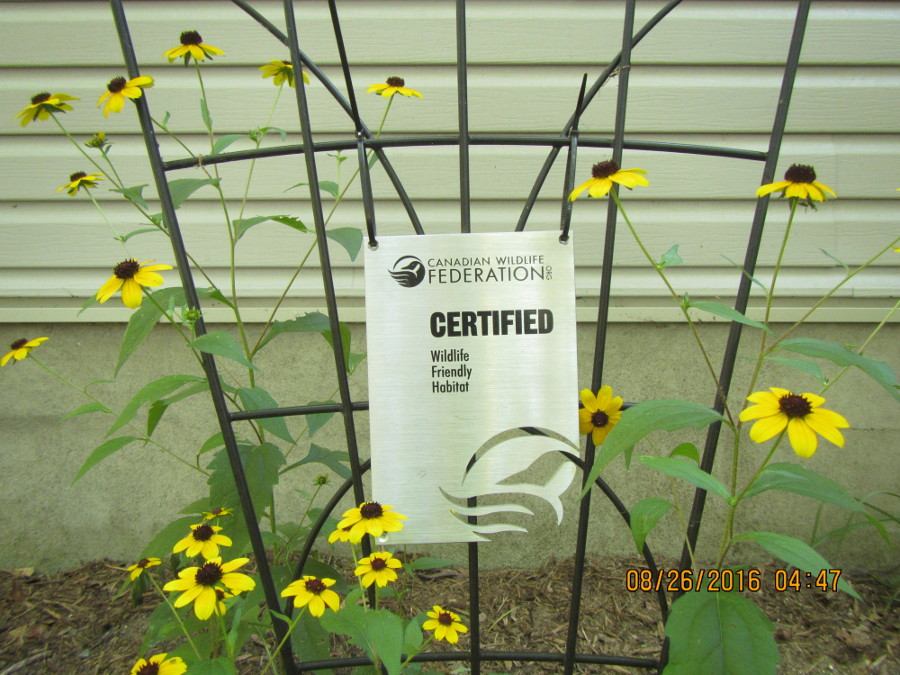 sign black text lattice black eyed susan