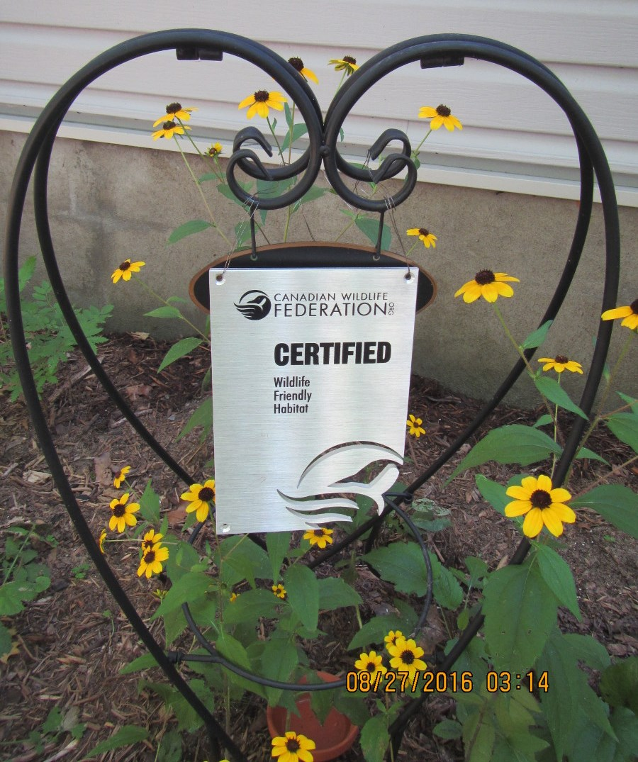 sign metal hanging black eyed susan