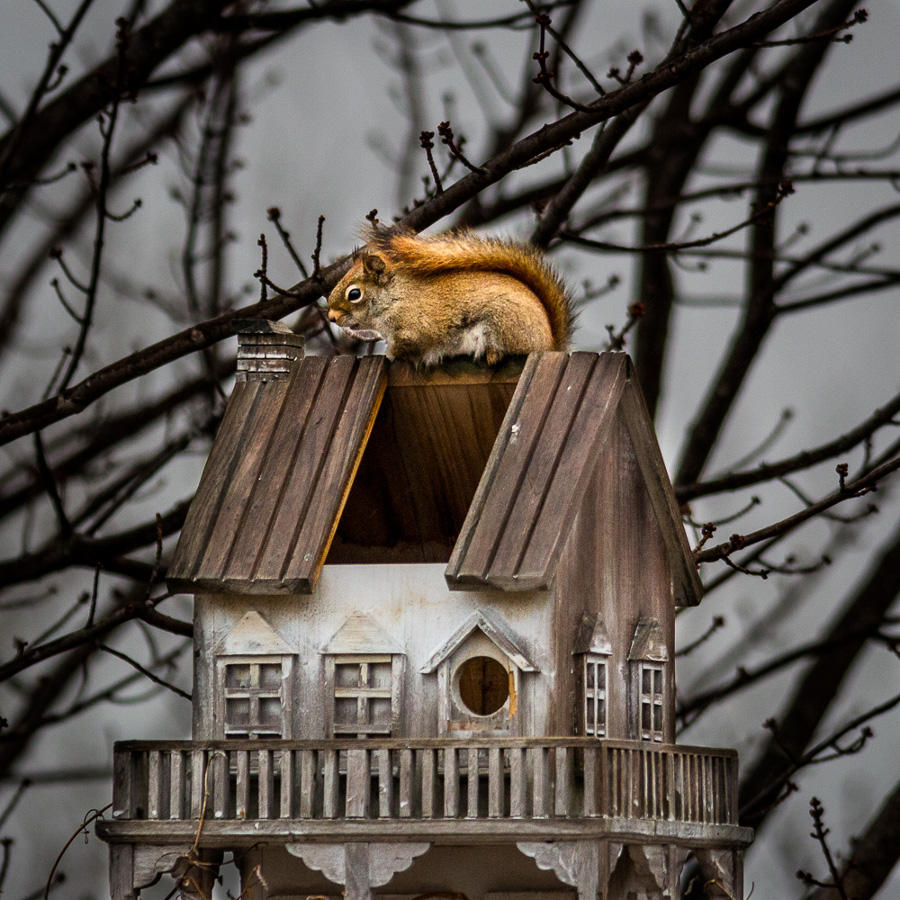 Shelter squirrel bird house