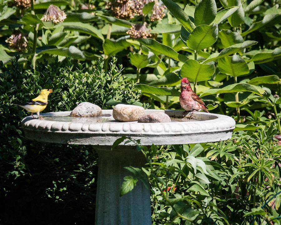 water birds bath  gallinger ON
