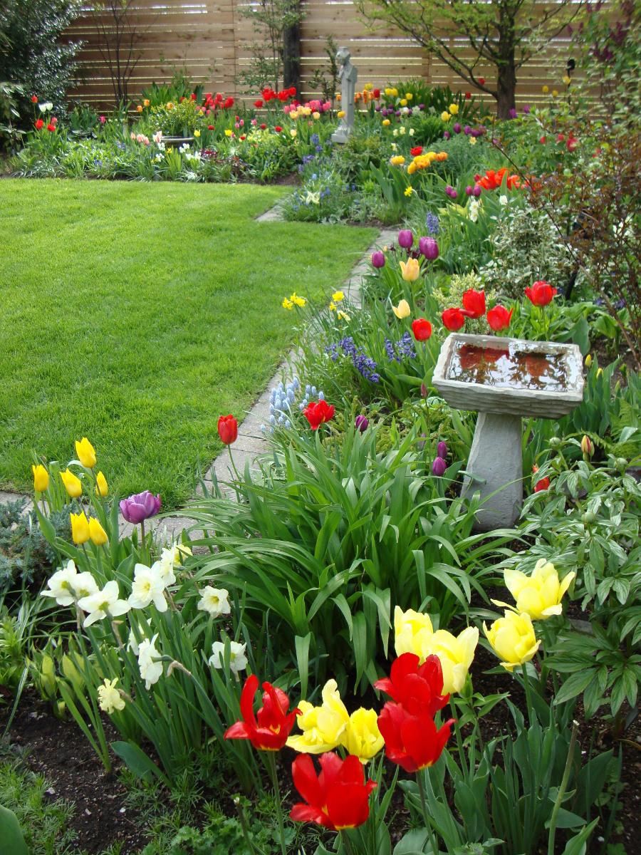 water bird bath Spring flowers Woods Toronto ON
