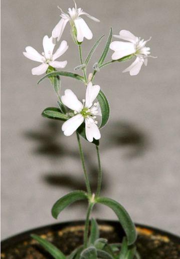 Ancient Plant