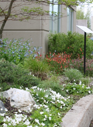 spring flowers by pond bed sign