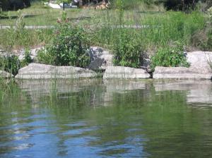 Ornamental Shoreline