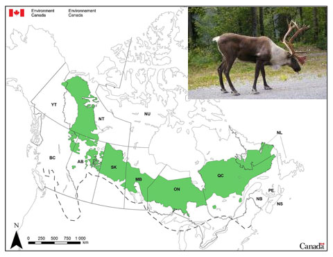 Caribou and habitat map