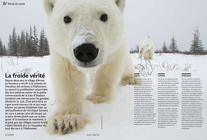 Status report on Polar bears