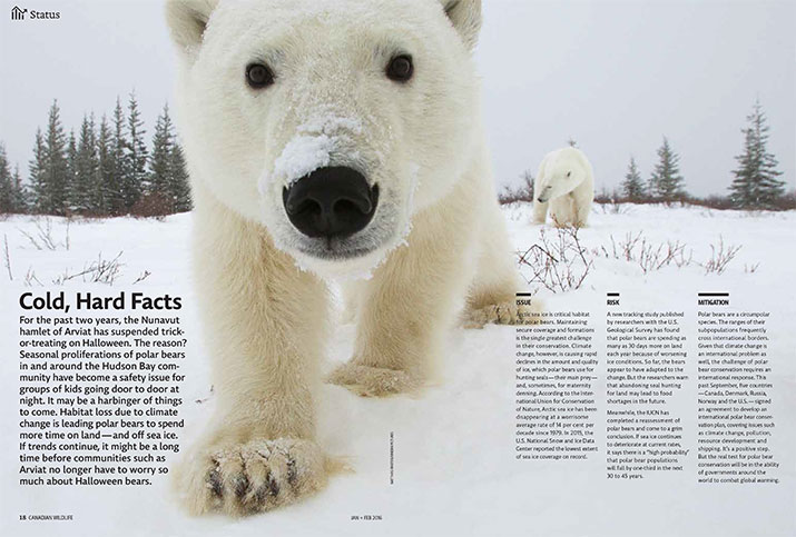 Image of article with a close up photo of a polar bear