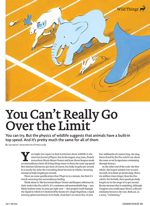 Image of article with illustration of animals lining at a start line for a race