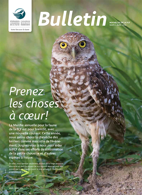 Bulletin cover with photo of an owl