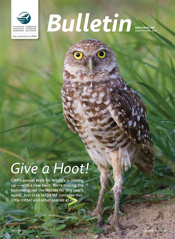 Bulletin cover with photo of an owl on it