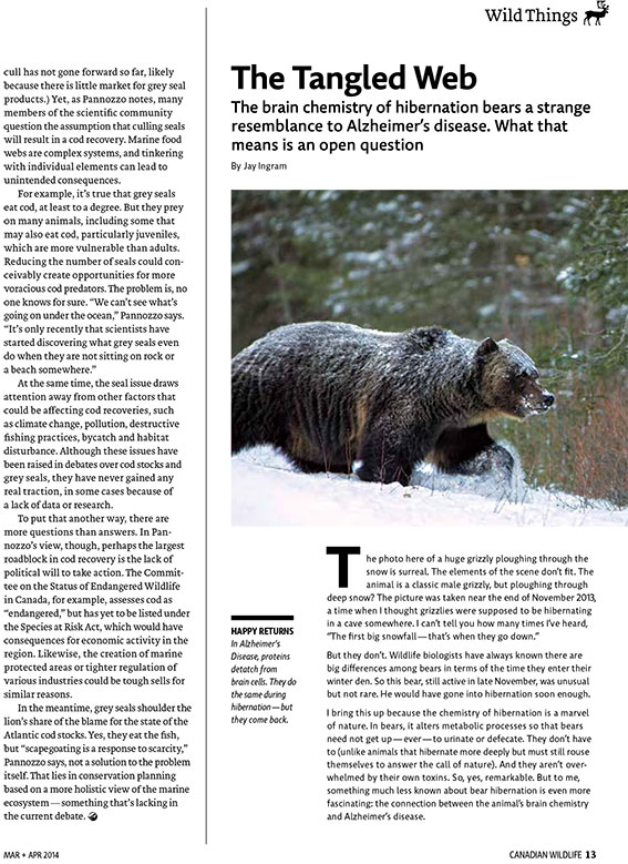 Article image with photo of a bear in winter