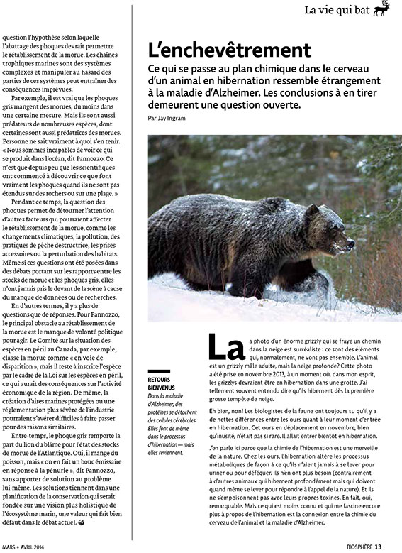 Article image with photo of bear in winter