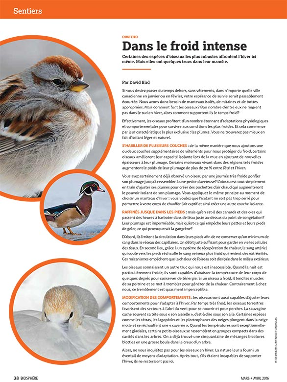 Article image with photos of birds that winter well