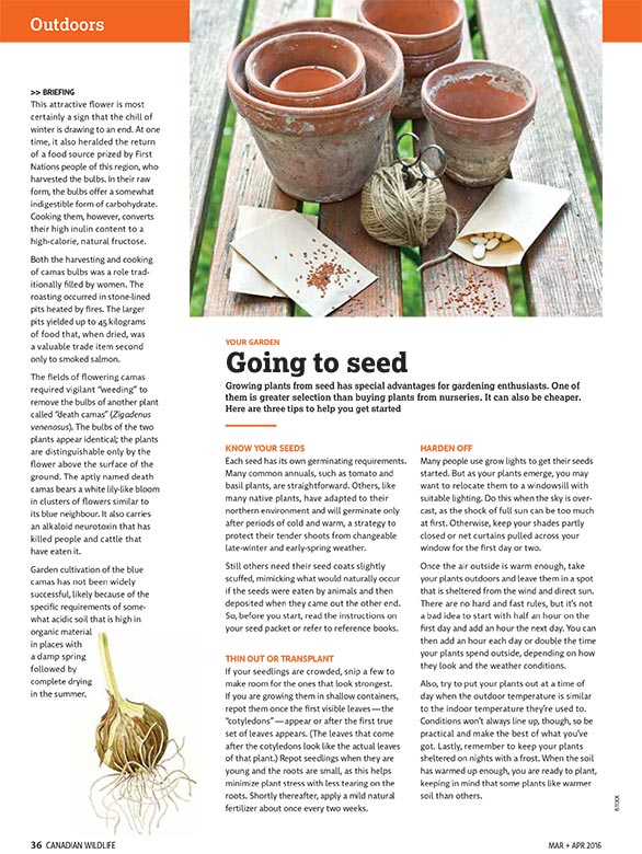 Article image with photos of clay pots
