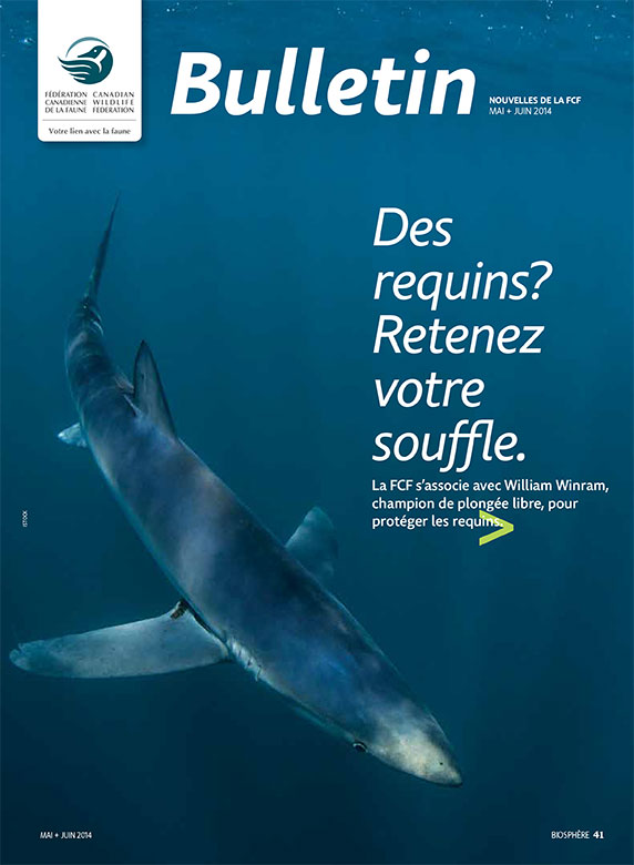Bulletin cover with photo of a shark