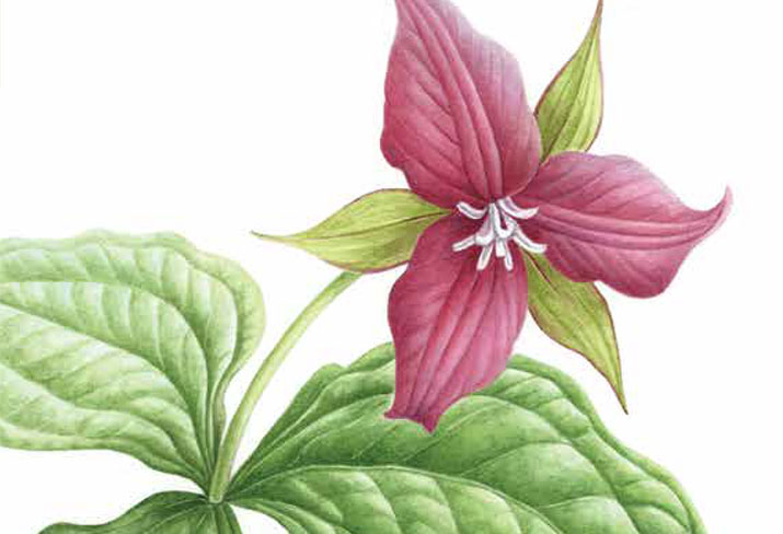 Article Image with illustration of flower